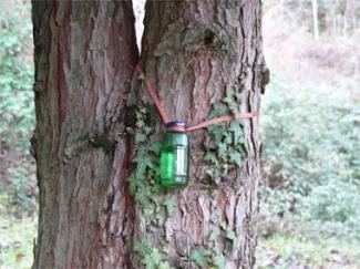 fitoterapia energetica maria cornelia giordani il canto degli alberi