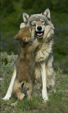 lupi famiglia