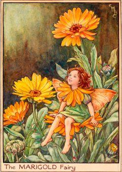 Marigold Fairy - Fata Calendula - Cicely Mary Barker