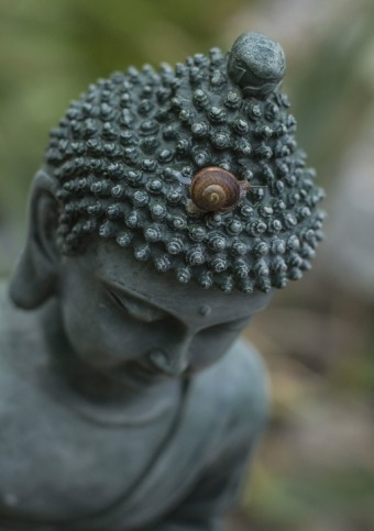 buddha lumaca