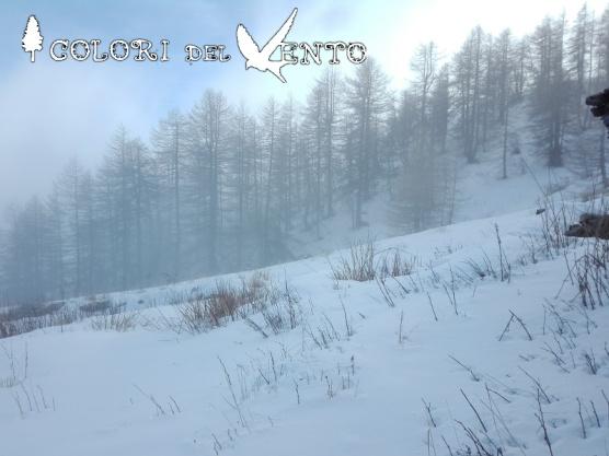 natura neve bosco