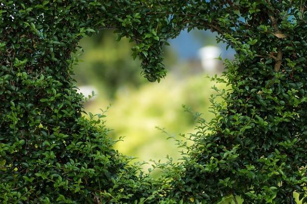 chakra del cuore.jpg
