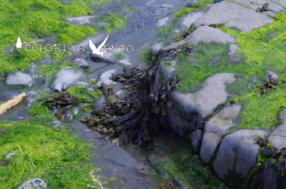 alghe spiaggia1