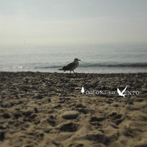 gabbiano spiaggia3