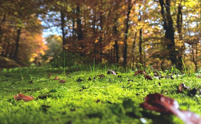 estate autunno
