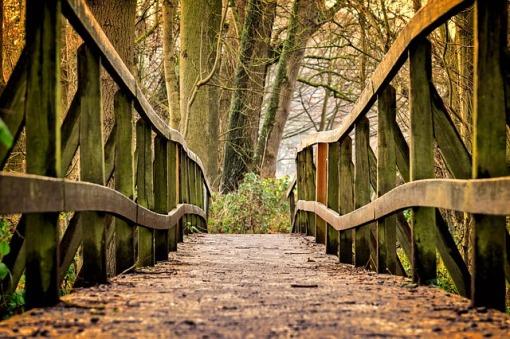 passegiata nel bosco