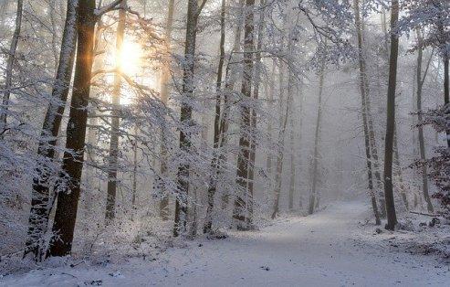 foresta neve
