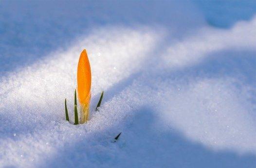 rinascita primavera