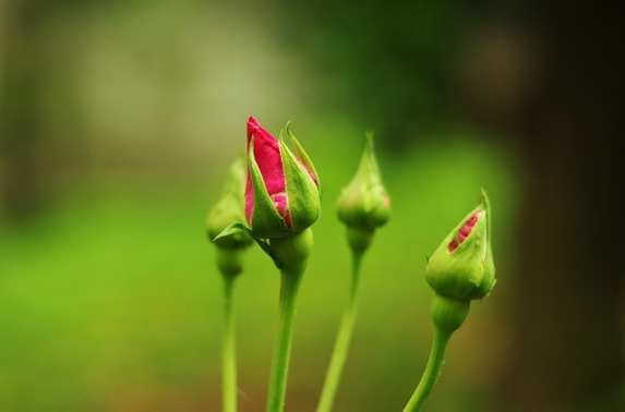 boccioli primavera
