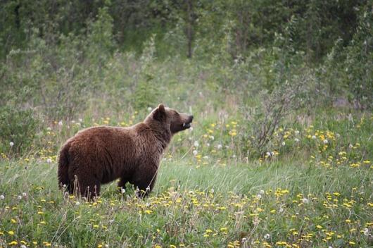 orso primavera