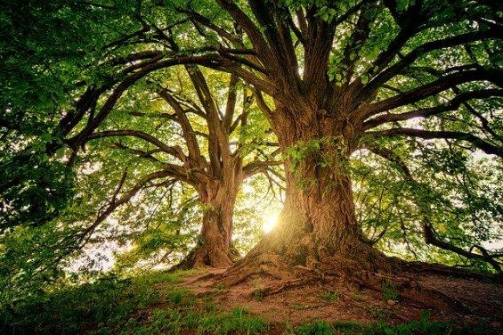 alberi energia